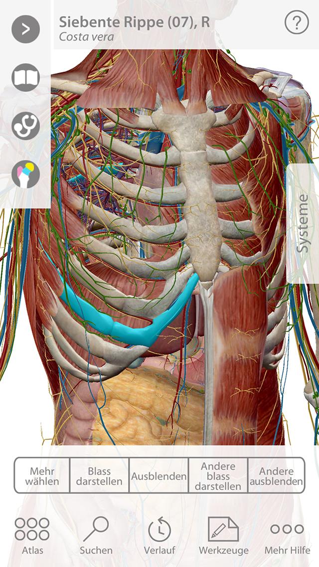 Atlas der menschlichen Anatomie - Visible Body - App