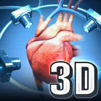 MeAV Anatomie 3D