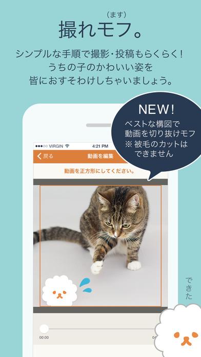 mofur - 犬猫10秒動画を共有のおすすめ画像3