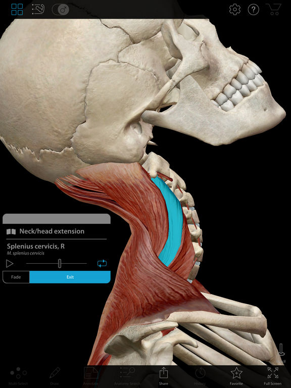 Muscle Premium - Human Anatomy, Kinesiology, Bones Screenshots