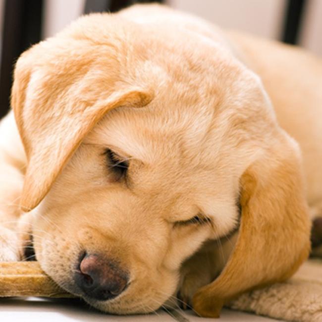 Cutie Scratch -Dogs-