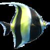 珊瑚礁水族馆 Coral Reef Aquarium for Mac