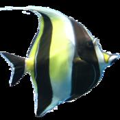 珊瑚礁水族馆 Coral Reef Aquarium