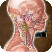 Lymphatic System Anatomy icon