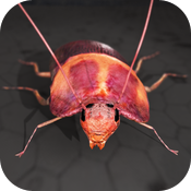 Roach Rage HD icon