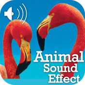Best Animal Sounds HD icon