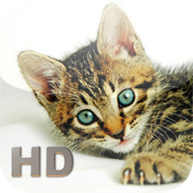Cats Encyclopedia HD icon