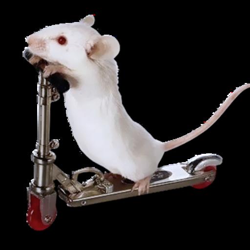 Mousex.512x512-75