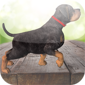 3D Dogs Puzzles - Cute Puppy Puzzle icon