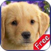 Golden Retriever+ Free icon