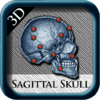 Sagittal Skull 3D