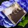 アジサイ−紫陽花−