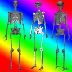 3D Human Anatomy Skeleton