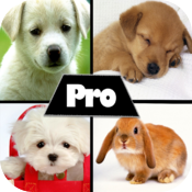 Cute HD Pictures Pro icon