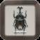 日本のコウチュウ(カブトムシのなかま)|図鑑NEO for iPhone