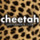 Cheetah South Florida