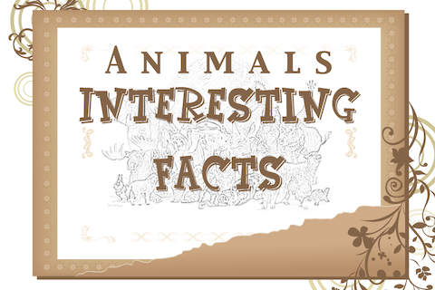 Animals Facts