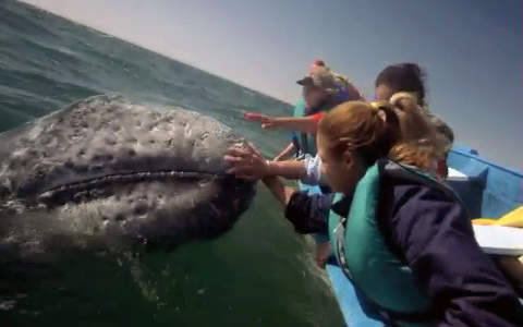 Ocean Oasis Videography - A Travel App