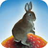 Jackrabbit Sunshine by Studio MFB, LLC icon