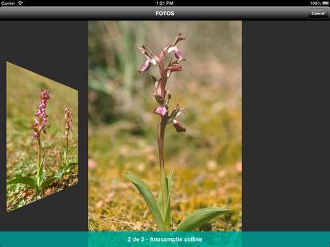 Iberian Orchids iPad Screenshot 4
