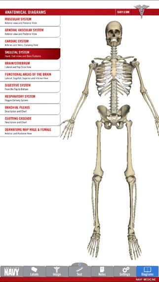 玩免費醫療APP|下載Anatomy Study Guide - America's Navy app不用錢|硬是要APP