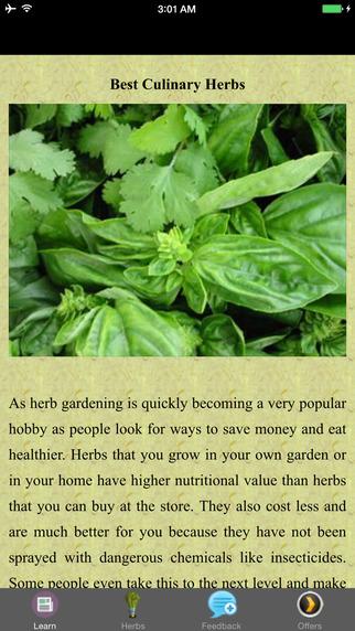 Best Culinary Herbs - Grow Basil
