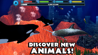 Image of Orca Simulator for iPhone