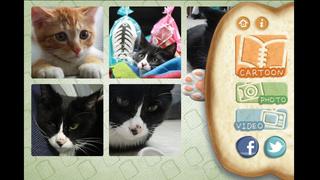 Kitz, the Street Cat iPhone