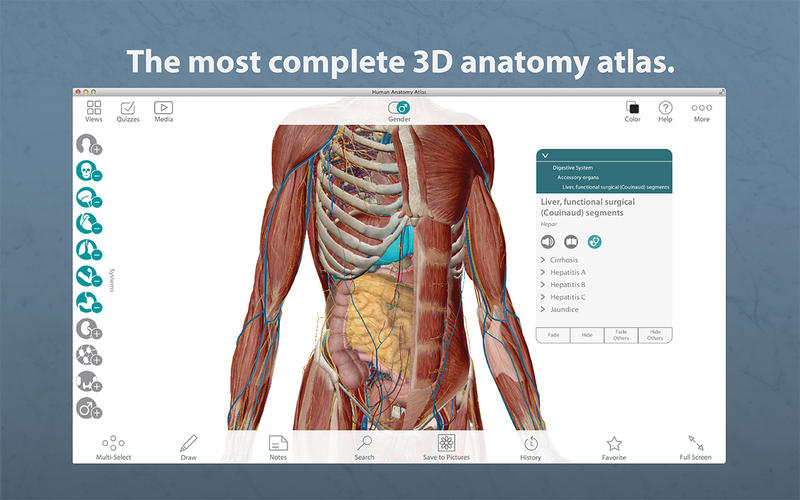 Human Anatomy Atlas 3d Anatomical Model Of The Human Body Appaddict