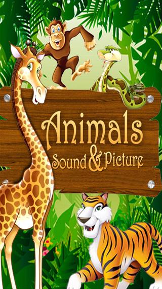 Animals Picture Sound