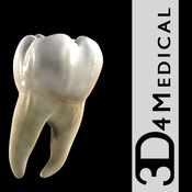 Dental Patient Education