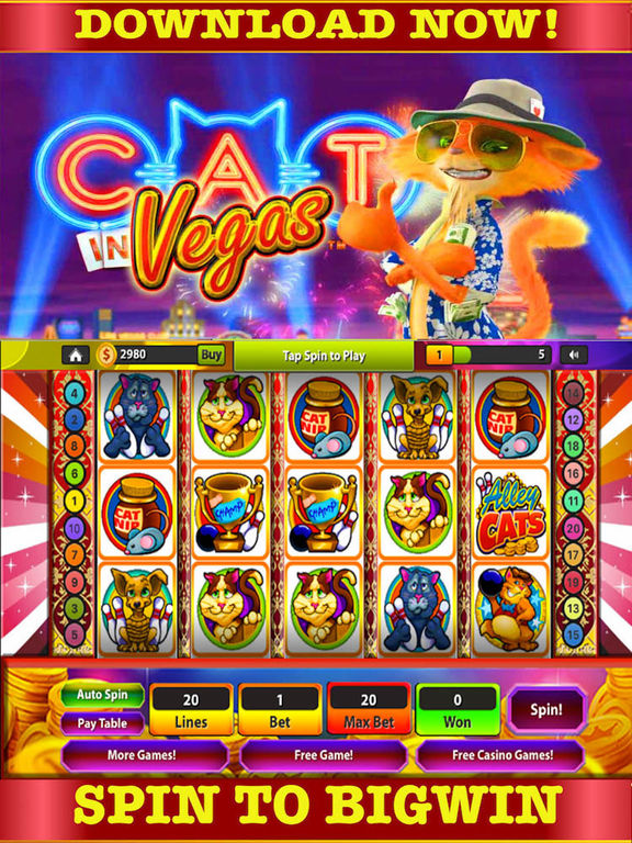 Cats casino game niall mcnamee gambling