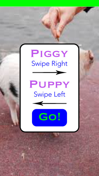 Pig Or Pup