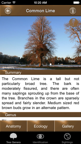 Winter TreeId - British Isles Tree Guide iPhone Screenshot 3