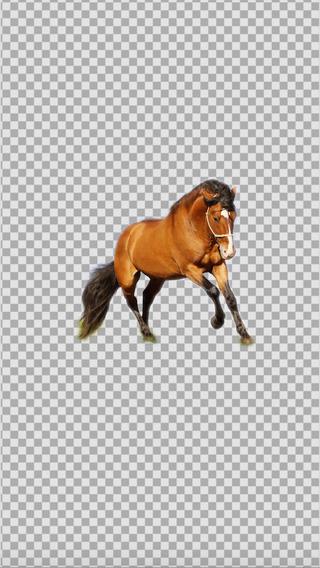 KnockOut Pro- Professional Grade Photo Cutout Easy Sticker Maker Superimpose Blender