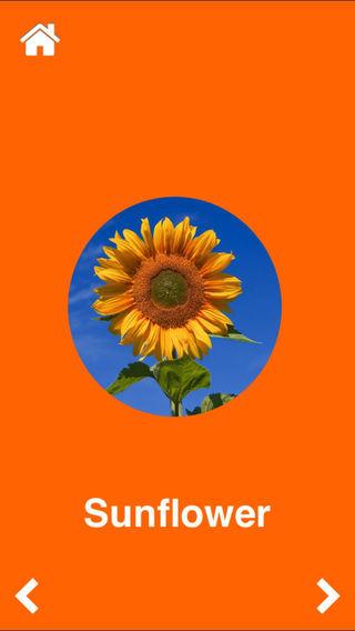 Flowers: Flashcards app for babies preschool kindergarten Pro
