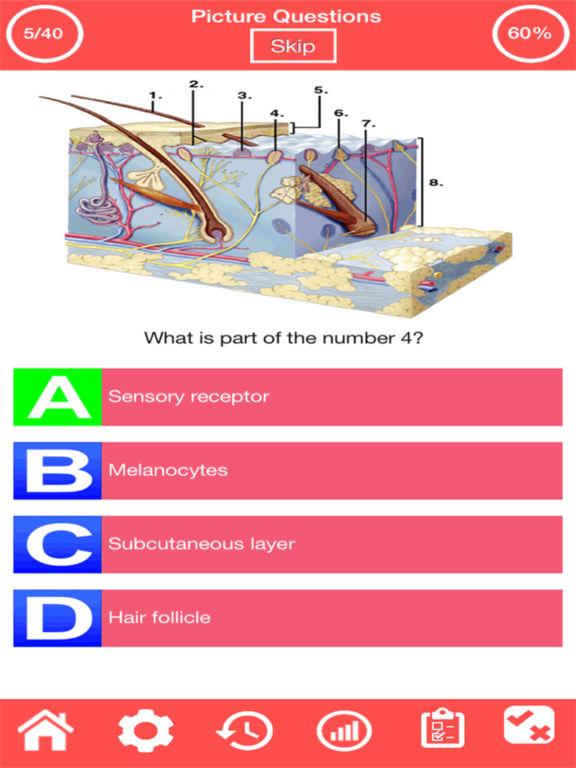 Integumentary System Quiz screenshot 8