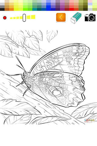 Paint and Drawing Butterfly For Toodle screenshot 2