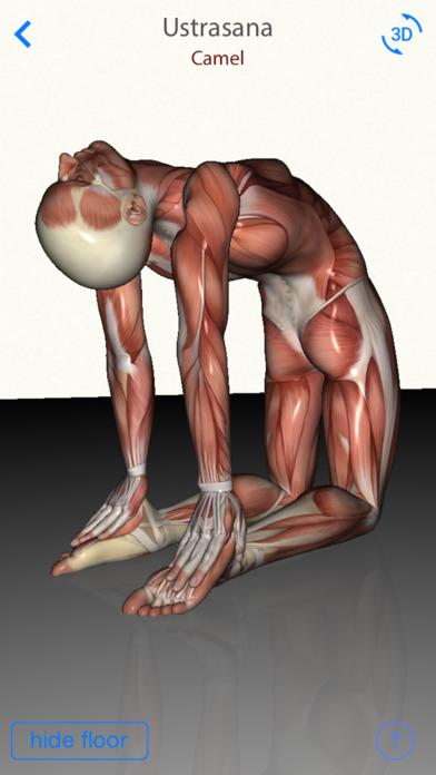 3D Yoga Anatomy Screenshots