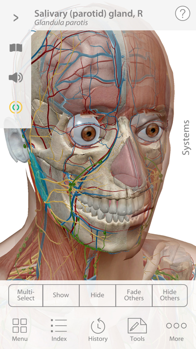 Complete anatomy of human body