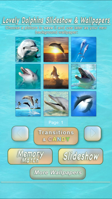 Lovely Dolphins Slideshow & Wallpapers iPhone Screenshot 4