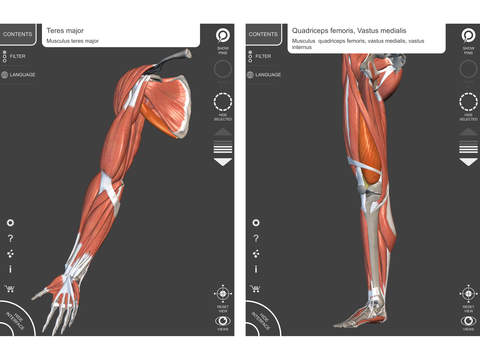 Muscular System - 3D Atlas of Anatomy - Muscles and bones of the ...