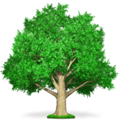 关于提纲 Tree