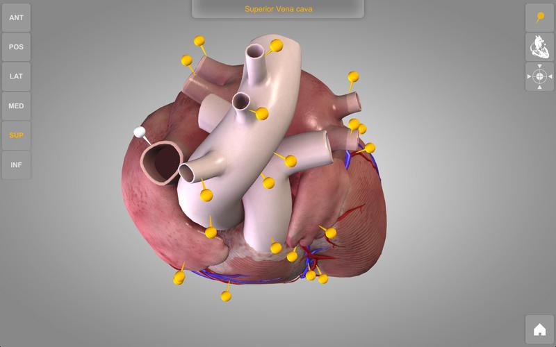 Heart 3D Atlas of Anatomy Lite Screenshot - 4