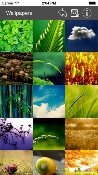 Wallpaper Collection Nature Edition