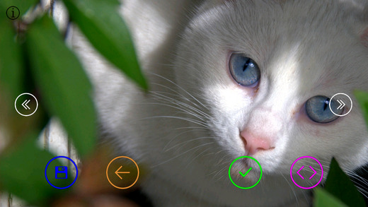Cute Cats - Wallpapers Slideshow HD
