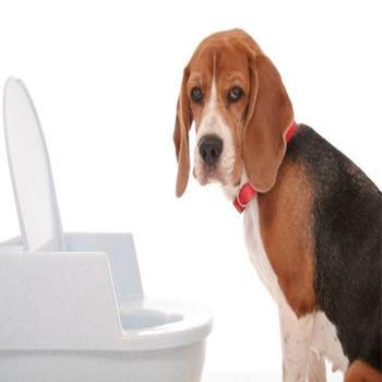 Potty Training For Dogs LOGO-APP點子