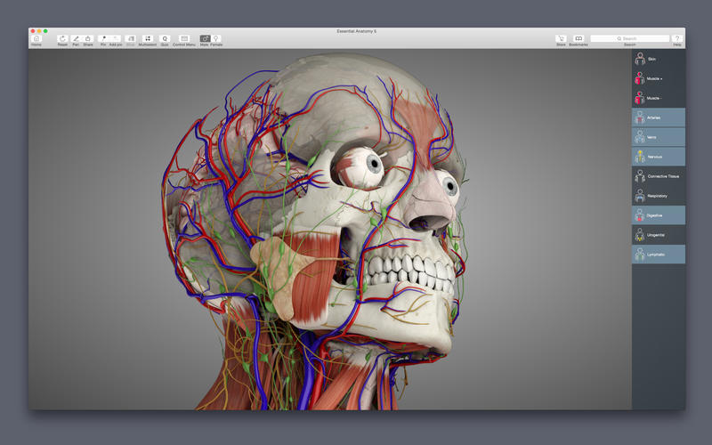 Essential Anatomy 5 DMG Cracked for Mac Free Download