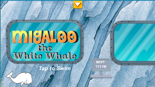 Migaloo the White Whale