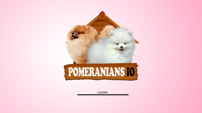 Pomeranians IO screenshot 4